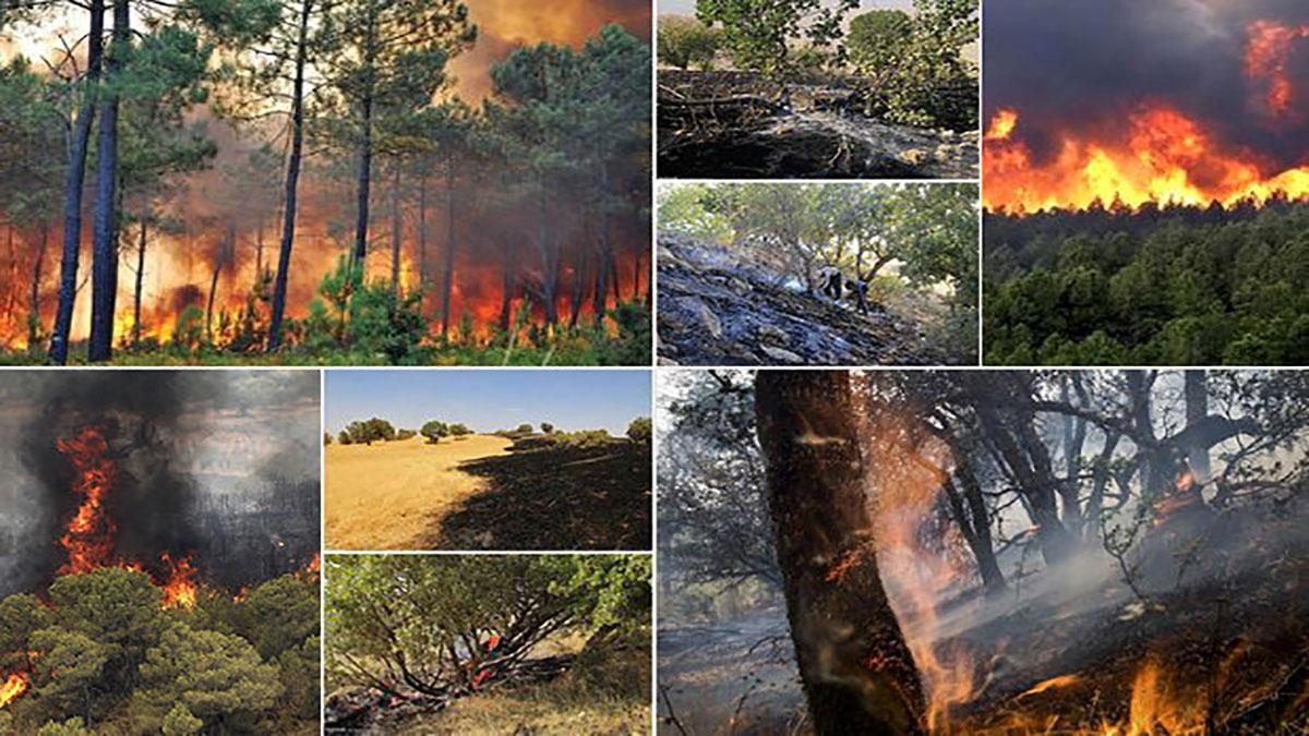 آتشسوزی جنگلهای زاگرس